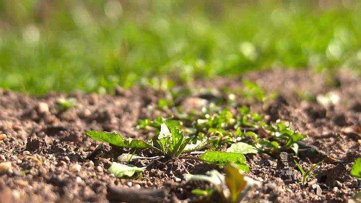 Jak se bránit proti plevelům v zahradě
