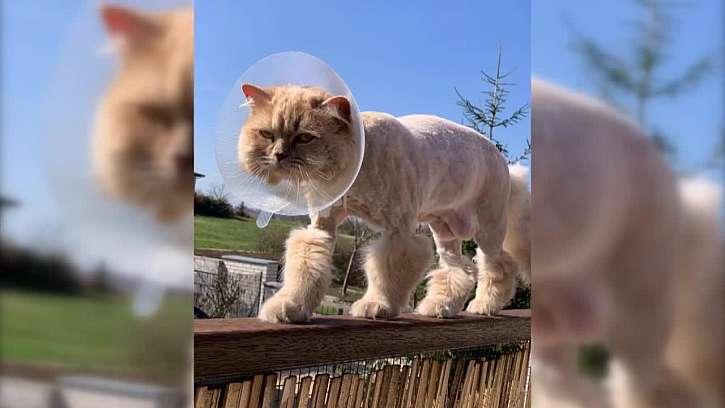 Jak kočičkám udržovat srst a drápky