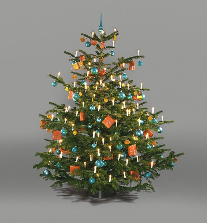 5 rad jak správně pokácet vlastní vánoční stromek