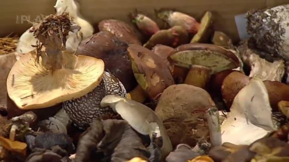 Podzimní houby