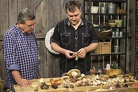Podzimní houby jedlé, nejedlé i jedovaté: Vyznáte se v holubinkách, bedlách i pečárkách?