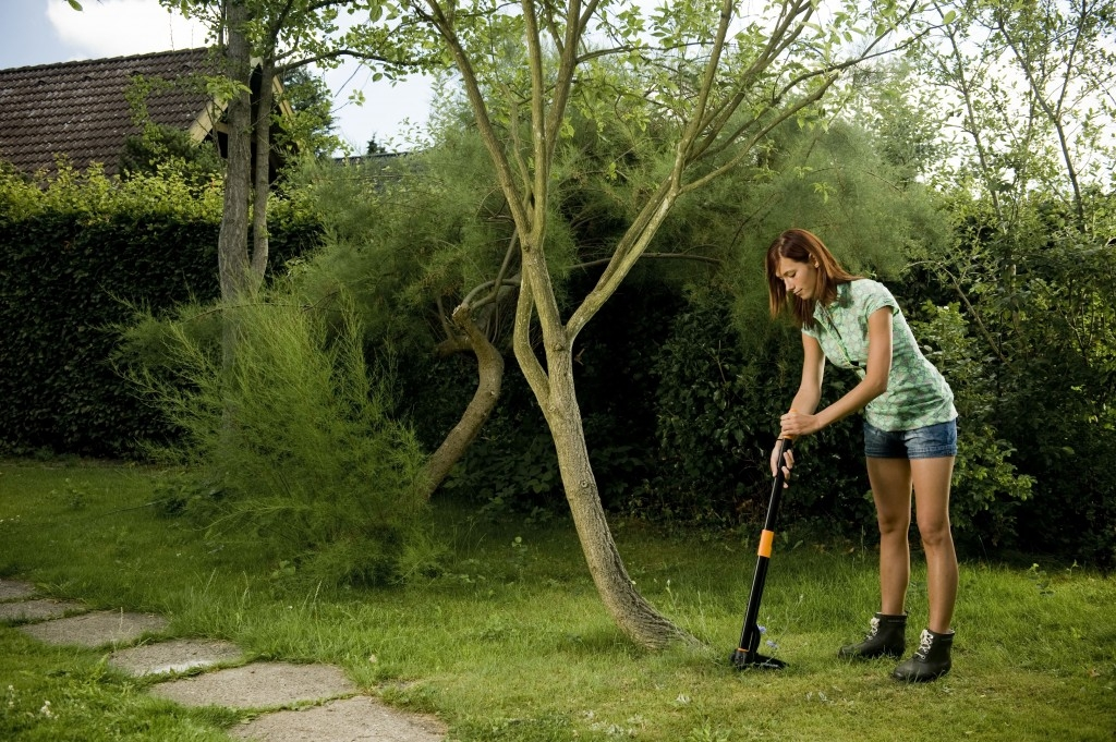 Krásný trávník bez pampelišek a plevele
