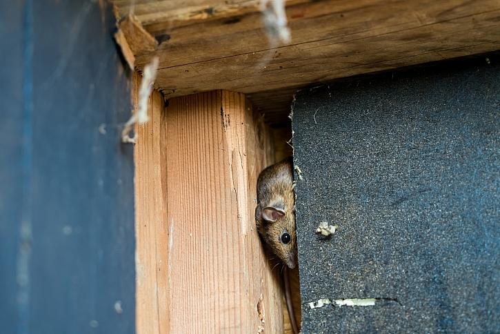 Vhodně zvoleným typem izolace snížíte výskyt kun a hlodavců pod střechou (Zdroj: Depositphotos)