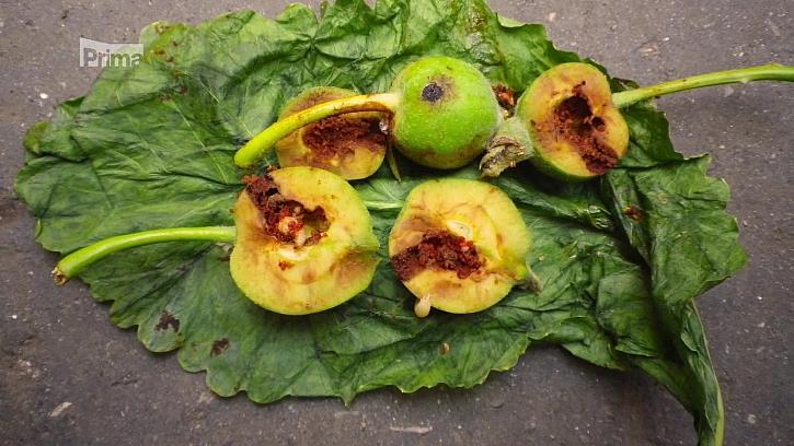 Postřik jádrovin proti obaleči jablečnému