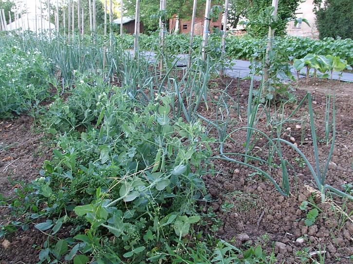zeleninové záhony 3