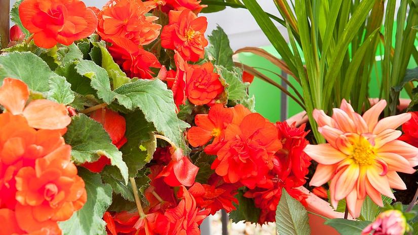 Jak si za trochu snahy užívat záplavu květin celé léto: Devět krasavic, kterým se daří i v truhlíku