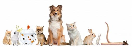 Rekonvalescence zvířat po nemoci či úrazu