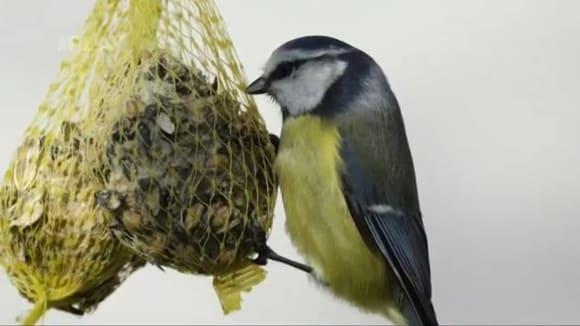 Jak a čím v zimě přikrmovat ptáčky