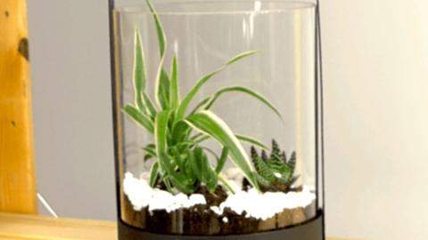 Jak vytvořit miniskalku do bytu aneb zahrádka ve skle