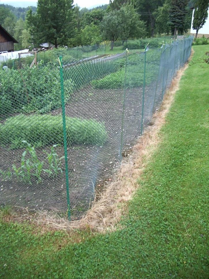 Herbicidy je možné bezpečně používat i k hubení plevele prorůstajícího do plotu