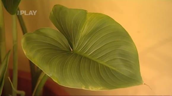 Péče o pokojové rostliny v zimním období