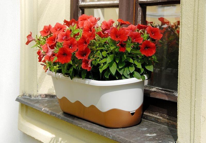 Vykouzlete na svém balkóně zelenou oázu. Pomohou vám samozavlažovací truhlíky a květináče.