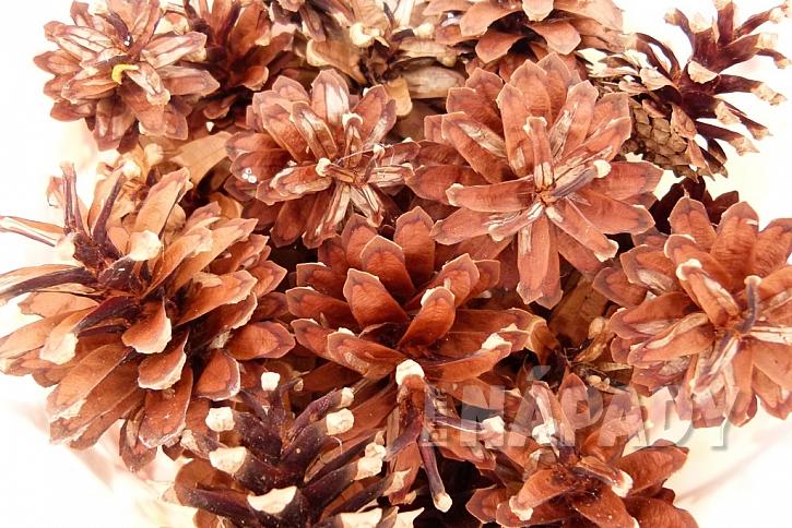Vybělené šišky rozzáří vaše podzimní  2