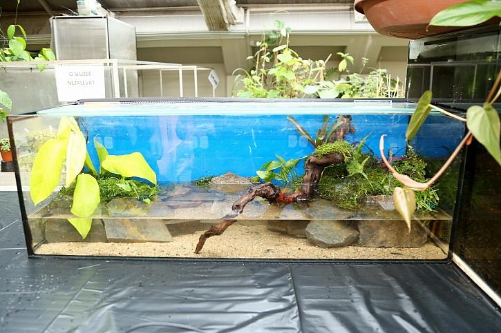Paludária jsou kombinací akvária a terária vjedné nádrži