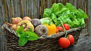 Základní pravidla pěstování zdravé zeleniny