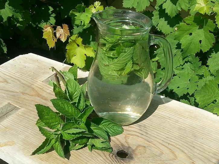 Domácí pěstování bylinek – bylinky za okny i na záhonu