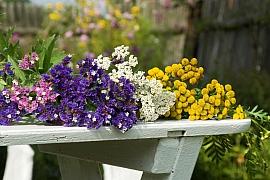Jak nejlépe usušit květiny: Jde to v mikrovlnce a dokonce i ve vodě!