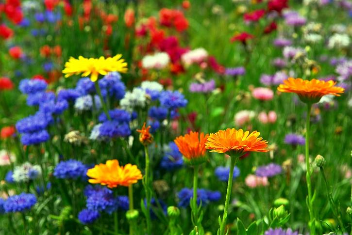 Voda základ života - výstava Květy (Zdroj: Depositphotos)