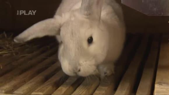 Domácí chov králíků