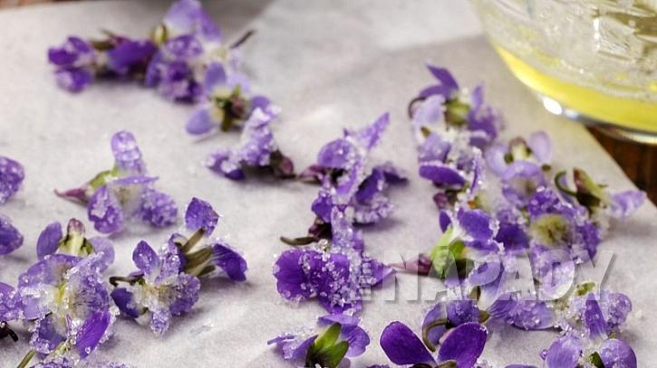 Fialka není jen voňavá, ale i léčivá bylinka k zakousnutí: kandované květy