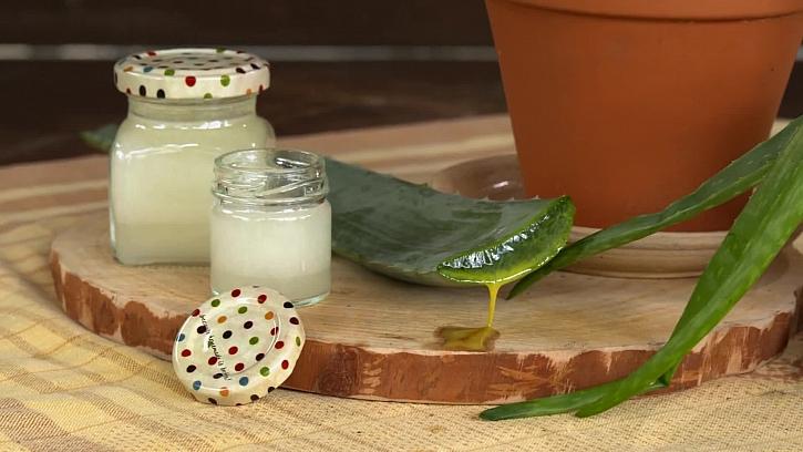 Péče o naše zdraví v podobě léčivého gelu z aloe vera