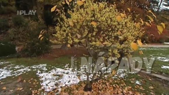 Podzimní návštěva botanické zahrady