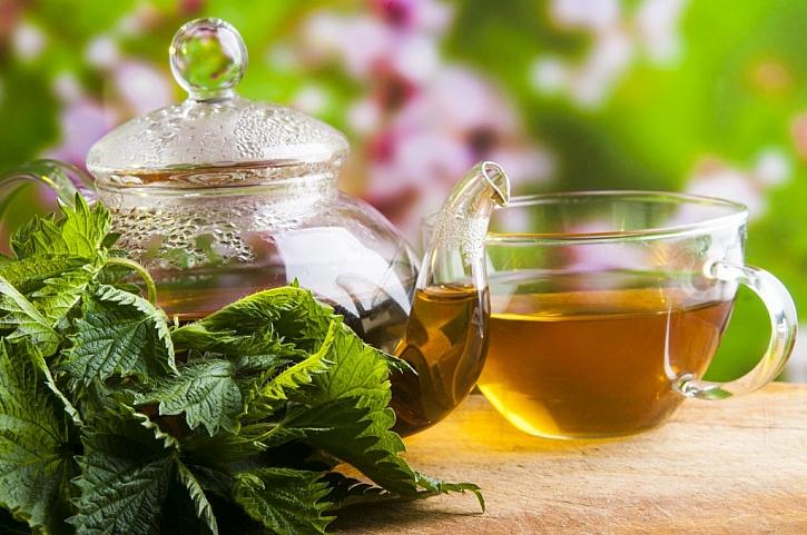 Z kopřivy si můžete připravit očistný čaj