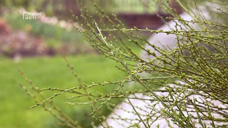 Větve