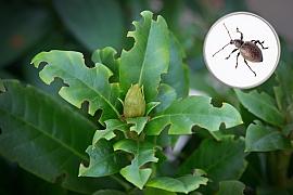 Lalokonosec může způsobit na zahradě velké škody