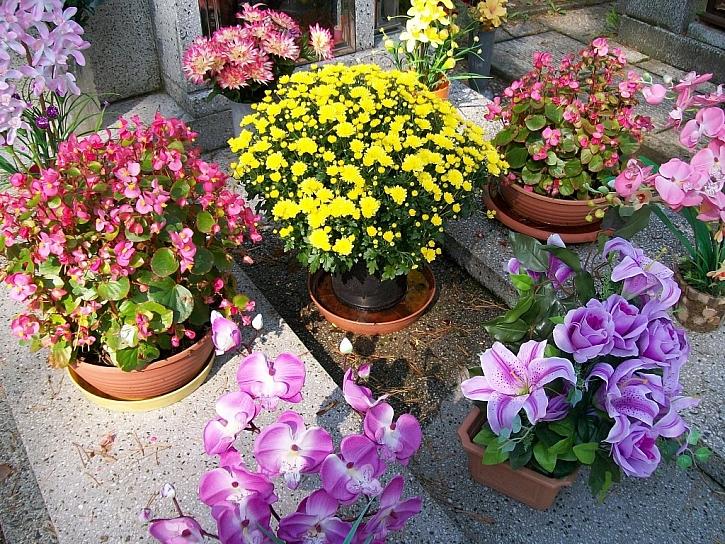Květiny na hrob: důležitá je správná zem