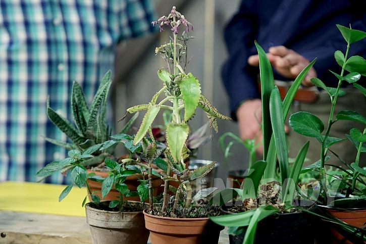 Jak správně množit pokojové rostliny 1