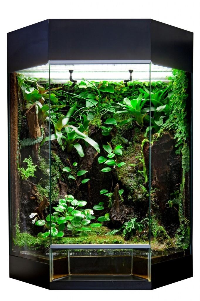 Z tropických rostlin si můžete vytvořit třeba malý deštný prales