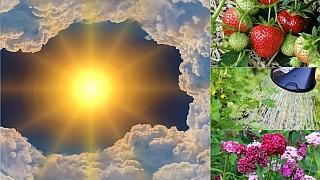 Předpověď počasí na druhý květnový víkend: Co dělat na zahradě