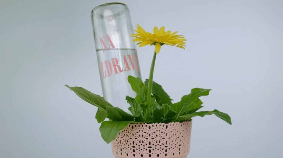 Jak se postarat o květiny, když odjíždíte a nemáte spolehlivého souseda, který by je chodil zalévat: Skleněné řešení