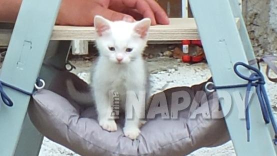 Domeček pro kočku ze štaflí: nakonec uděláme vyhlídkový pelíšek