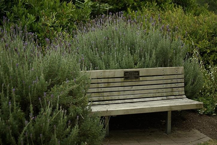 V blízkosti bylinkového záhonu můžete umístit zahradní lavičku
