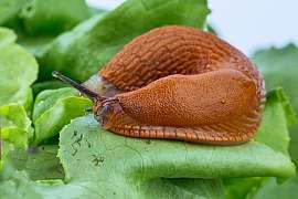 Pozor na škůdce zeleniny ve sklenících