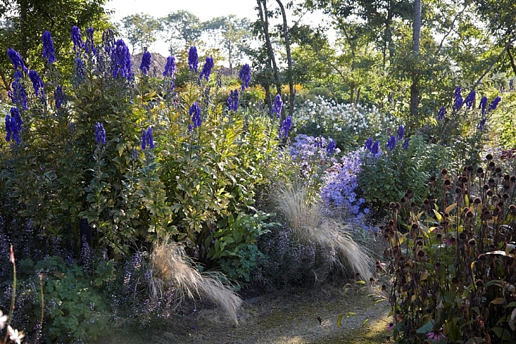 Zahrada v listopadu