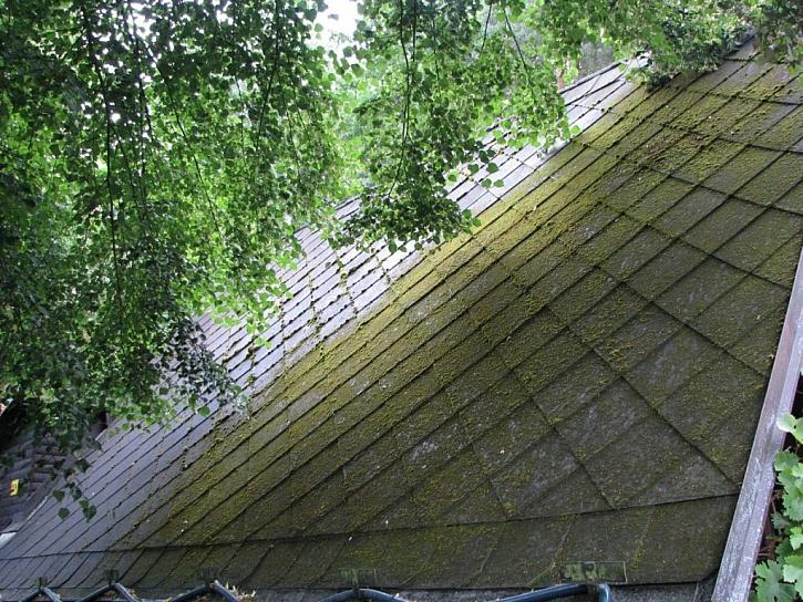 Staré azbestocementové krytiny jsou často porostlé mechy a lišejníky.