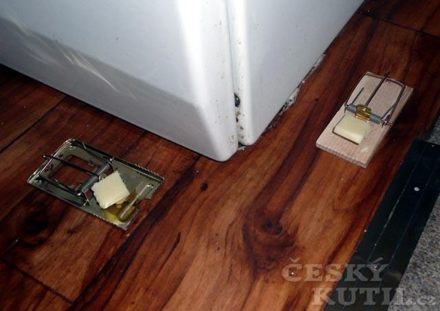 Moderní pastičky na myši a jiné škůdce