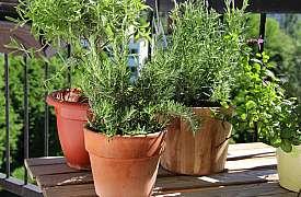 Poradíme vám, jak si můžete vypěstovat na balkoně chutnou zeleninu