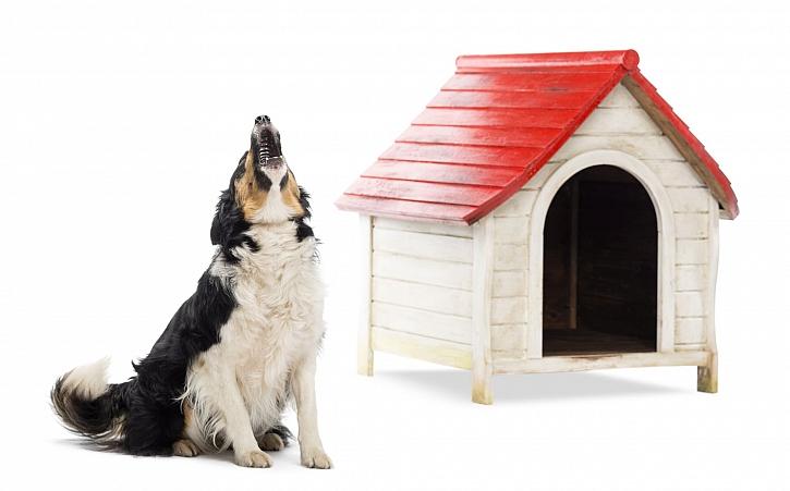 Pes štěká a vyje ve chvíli, kdy je sám a je mu smutno (Zdroj: Depositphotos)