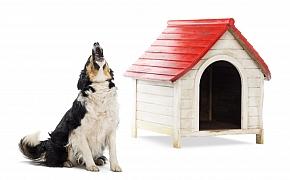 Co můžeme udělat, pokud váš pes štěká v bytě