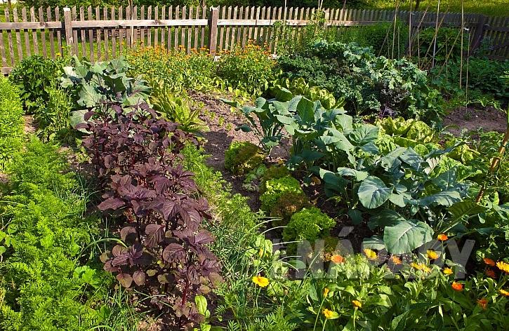 Smíšená kultura zeleniny napomůže v boji proti škůdcům bez chemie (Zdroj: depositphotos.com)