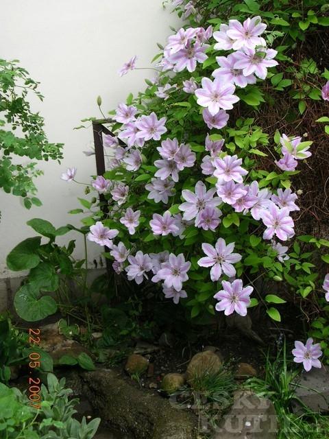 Chlouba zahrady