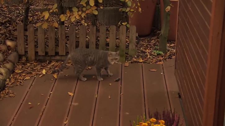 Kočka ulovila myš
