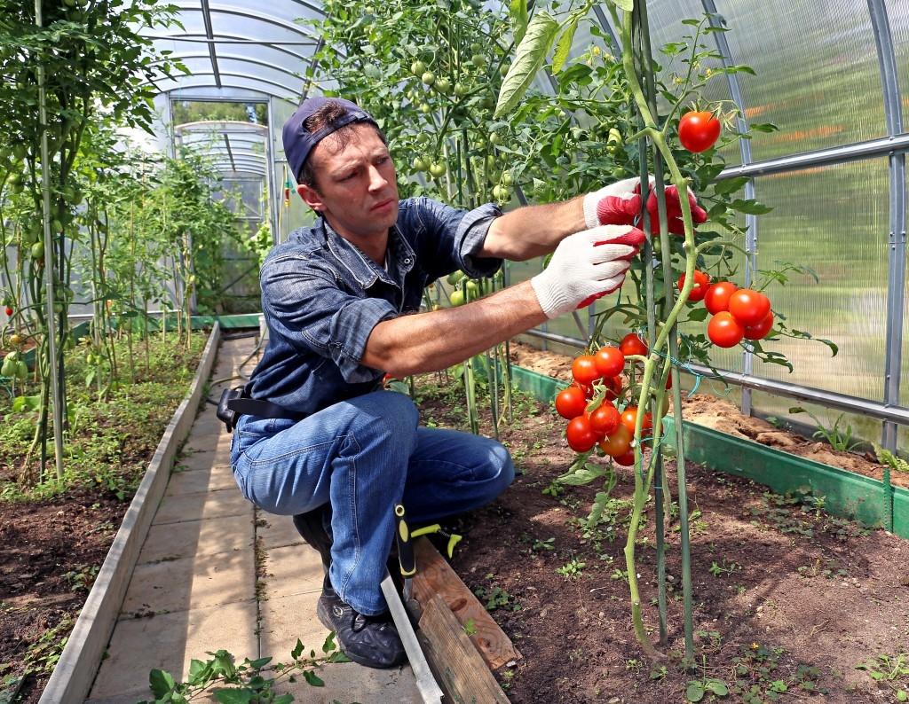 Stavba skleníku není těžká ani pro začátečníky