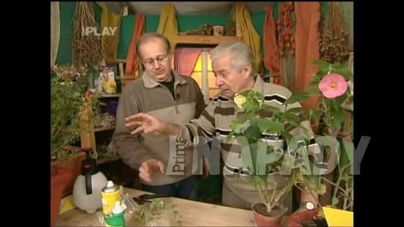 Jak na škůdce na pokojových rostlinách v zimě