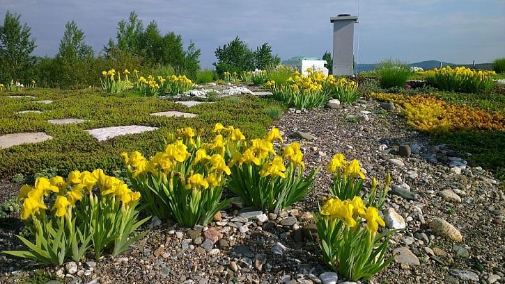 7 důvodů pro střešní zahradu
