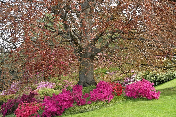V zahradě budou hezké i stromy okrasné listem